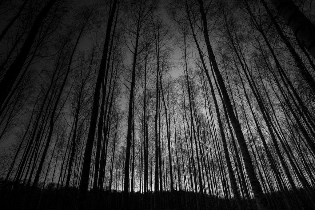 882_Winter.Woods