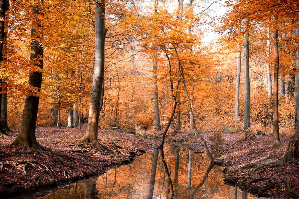 884_Herbst_Koeln_DE