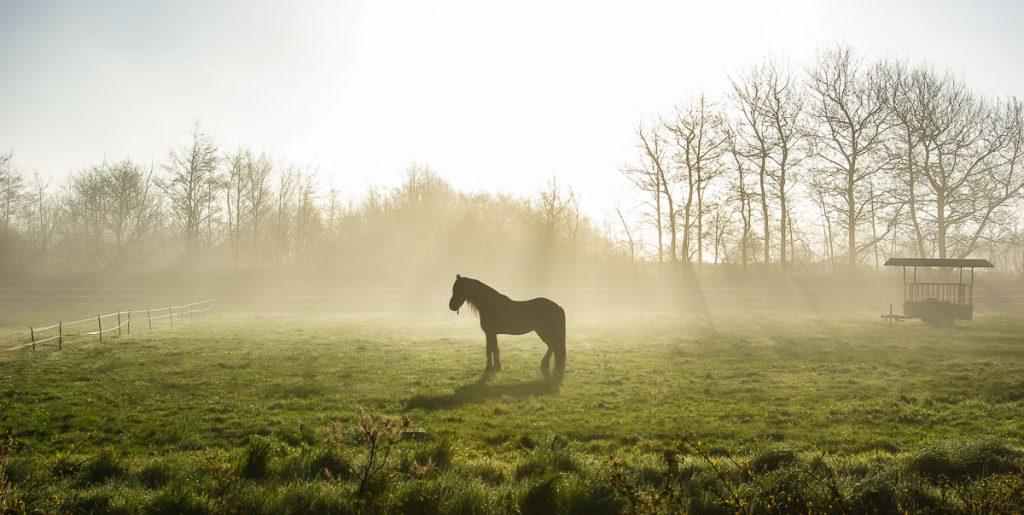 997_Pferd_Ouddorp_NL